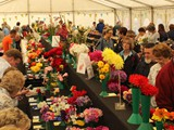 Exhibition Marquee Cut flowers, Fruit & Veg (1)