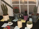 Pot Plants Section (2)