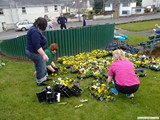 Ulster in Bloom 2011 (2)