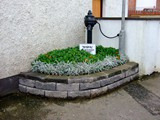 ulster in bloom 2012 (8)