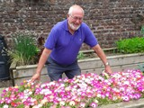 Pat inspecting the bed of Livingstone Daisies